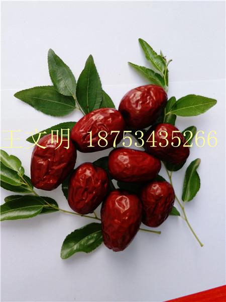 產地批發代購新疆紅棗多少錢