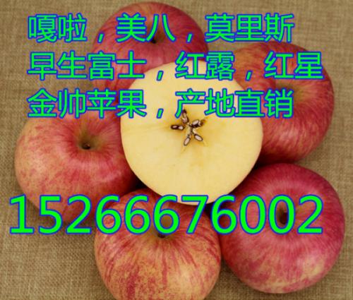 山东嘎啦美八苹果最新价格