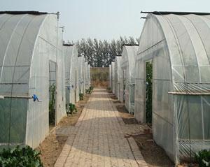 山东五合钢架温室