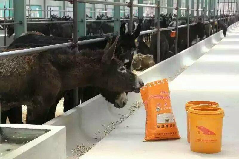 驴吃什么饲料 育肥驴怎么喂上膘快 徐州市驴饲料