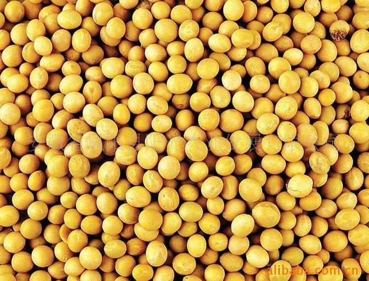漢江畜禽養殖求購黃豆菜籽豆餅菜餅豆粕菜粕等飼料原料