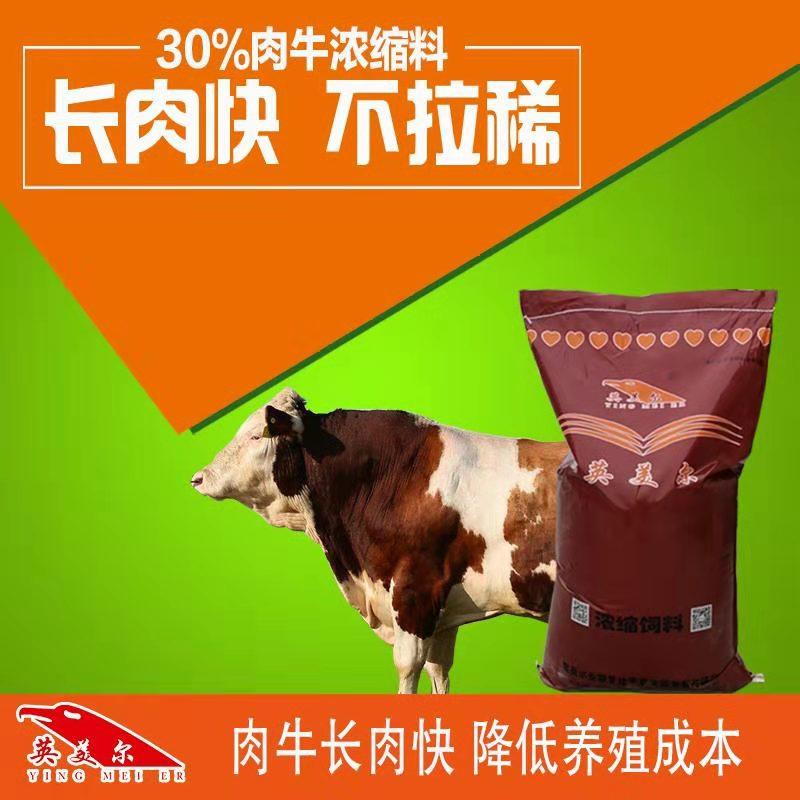 圈養牛怎么喂料-一頭牛一天吃多少