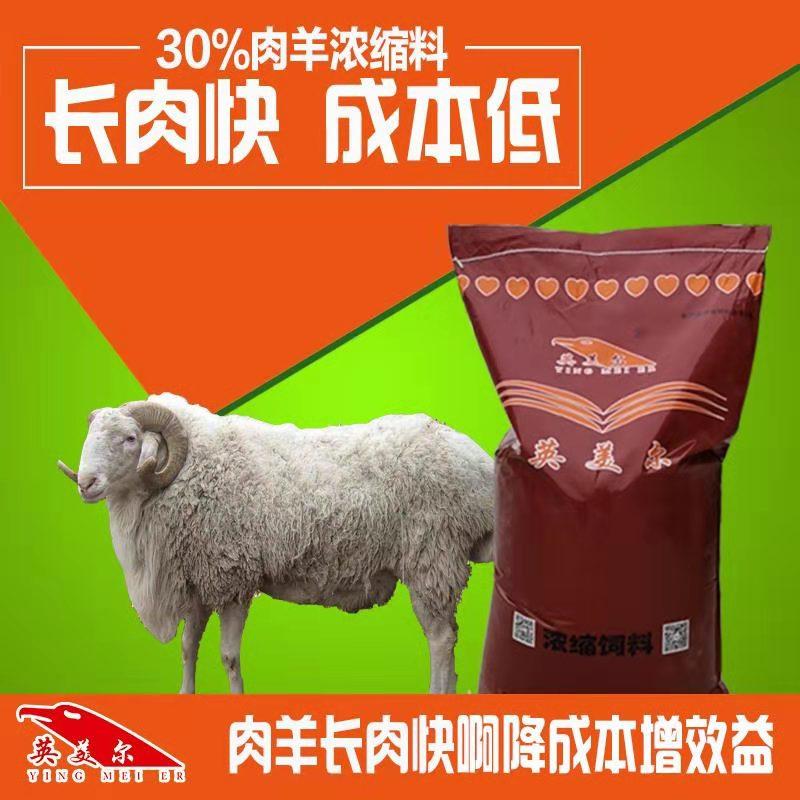 羊濃縮料配方-育肥羊飼料配方表