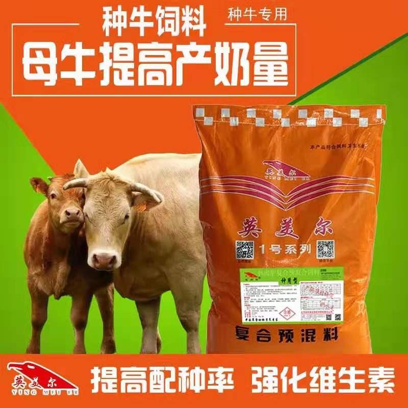繁殖母牛的飼養管理