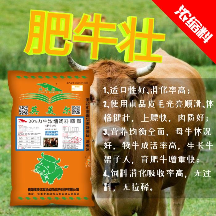 黄牛英美尔肥牛壮前期喂牛饲料配比有健胃功能利于消化缓解瘤胃胀气