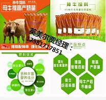 繁殖母牛的饲养管理技看著何林术