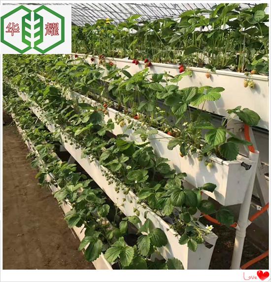 天津草莓立体支架式栽培/种植槽种植设备华耀生产