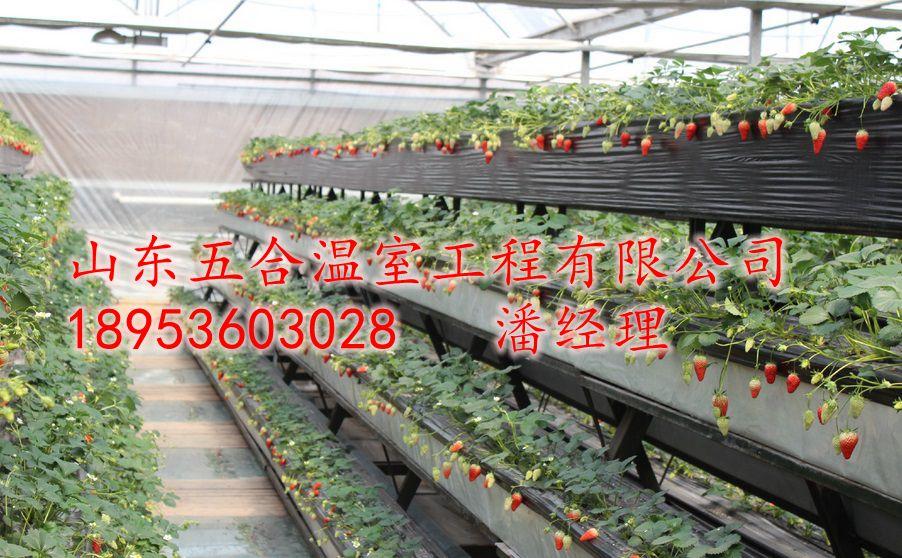 山东五合种植温室