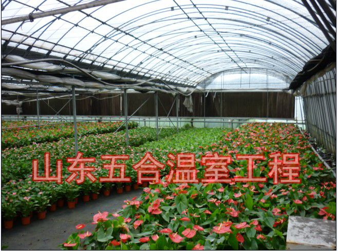 山东五合花卉温室