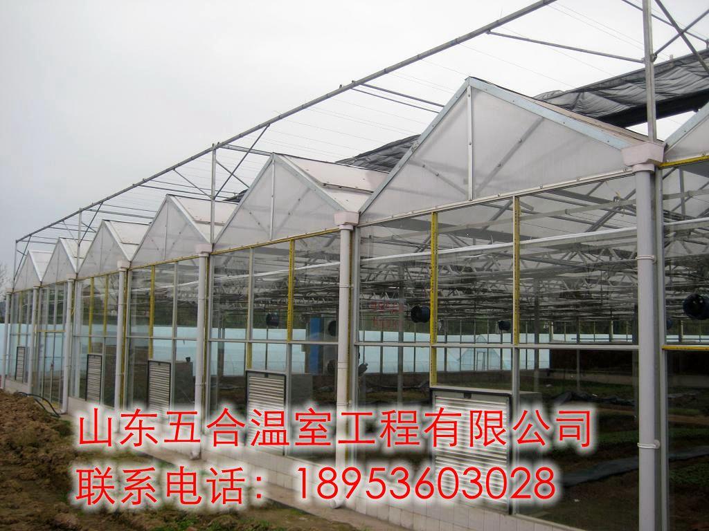 山东五合日光板温室