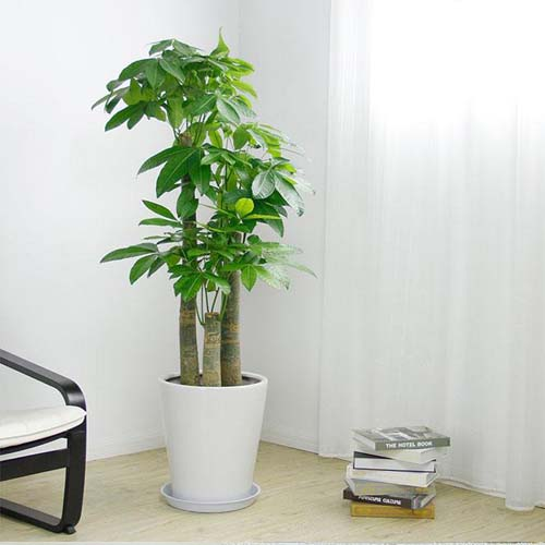 办公桌放什么开运植物  办公室寓意好的绿植