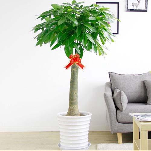 办公室的绿色植物  办公室放什么植物好