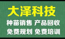 青蛙养殖上门免费培训/建塘【江苏大泽农业科技】现金回收