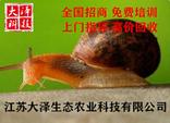 蜗牛养殖上门免费培训|建塘【江苏大泽农业科技】现金回收