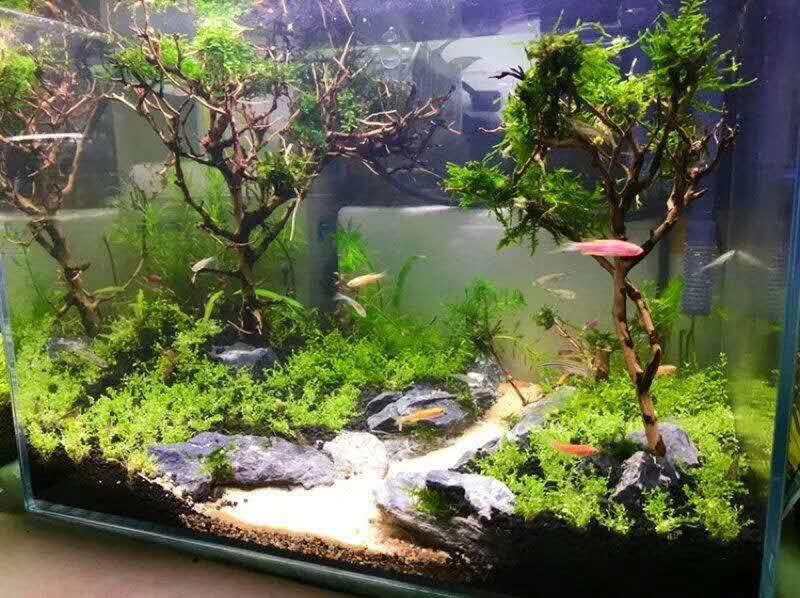 濟南高新齊魯軟件園魚缸造景