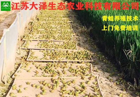 江苏优良的青蛙卵种苗,青蛙养殖基地【江苏大泽科技】技术支持