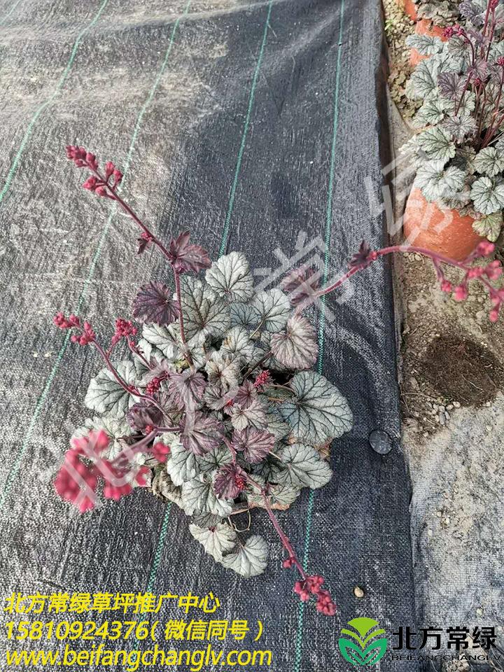 礬根價格是多少?