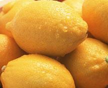 供应玉林柠檬苗示范基地  香水柠檬苗三大品牌