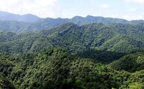 林業工程資質廣州資質代辦