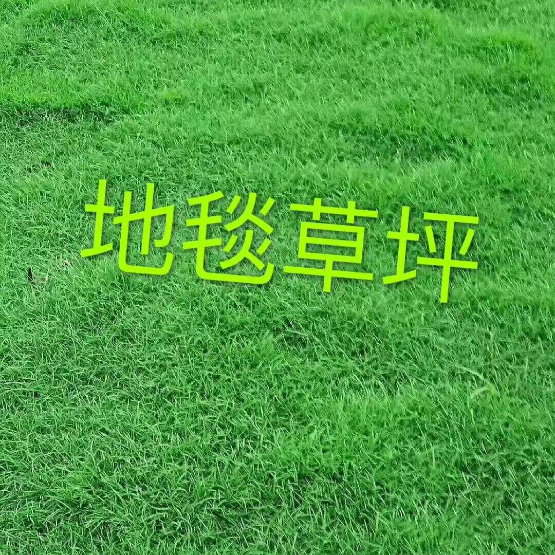 我想在营口朝阳买草坪