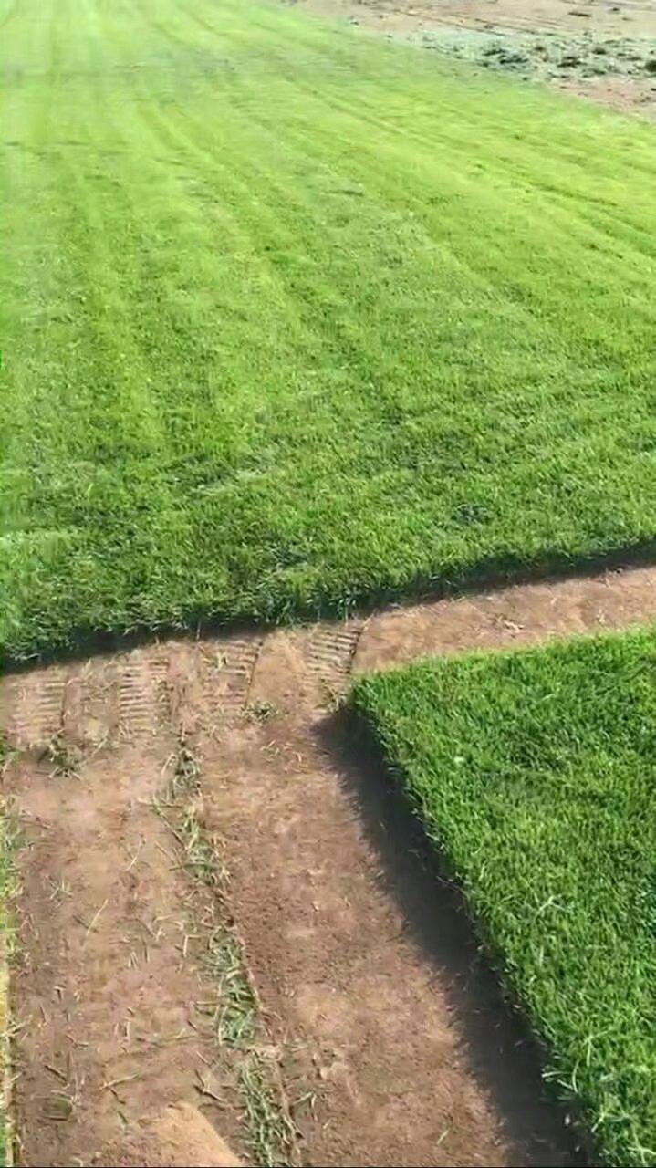 我想要在大慶買草坪