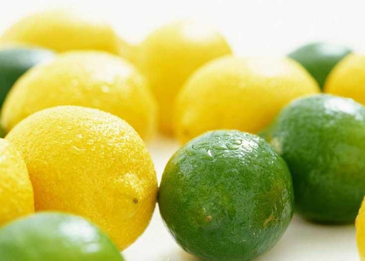供應檸檬苗和香水檸檬苗圃 玉林四季檸檬苗銷售部