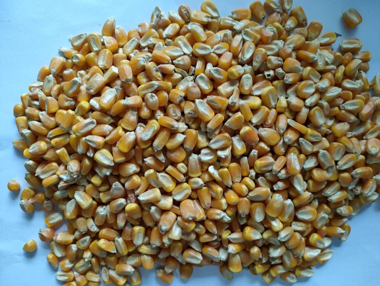 收购大量玉米、大米、小麦、大豆