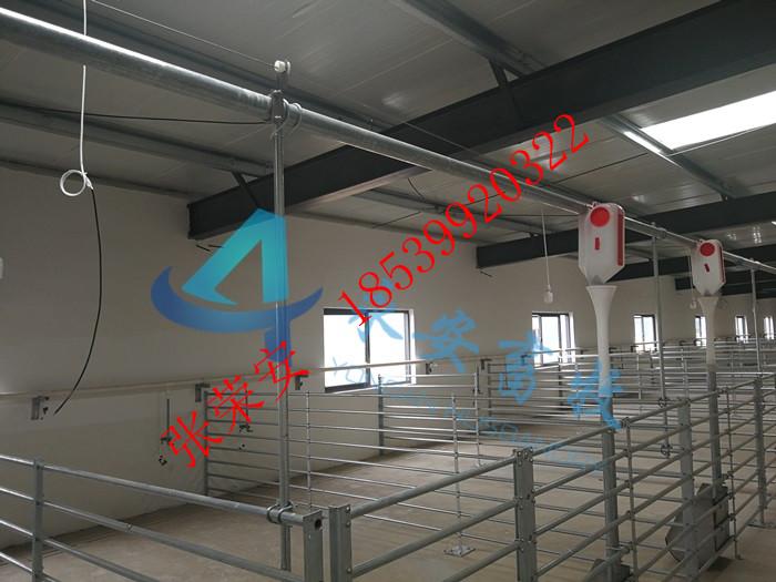 配怀舍自动供料系统定位栏自动上料定位栏自动化养猪自动饲喂