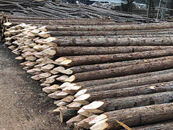 防汛木桩圆木桩长桩 防腐木桩 防洪专用松木桩