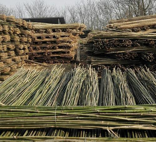南阳出售菜架竹批发市场