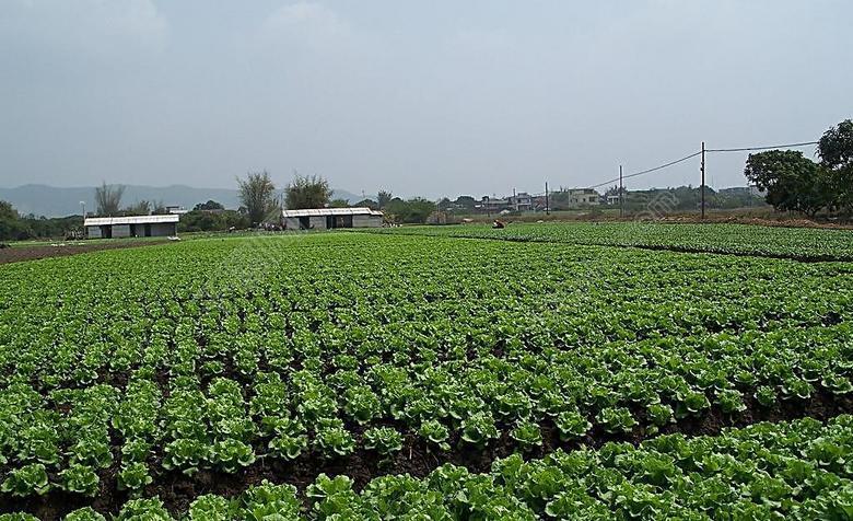 东莞横沥食材配送,果蔬优品优菜王