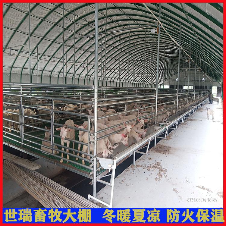 建设养羊棚价格 养羊棚一平方造价 山羊养殖棚搭建