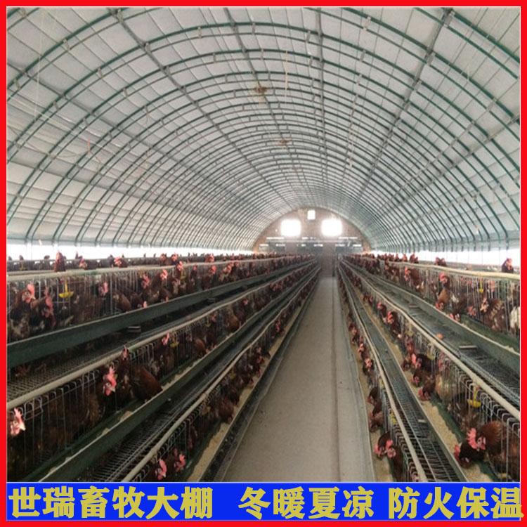 养鸡大棚搭建 散养鸡棚建设 安装养鸡大棚厂家