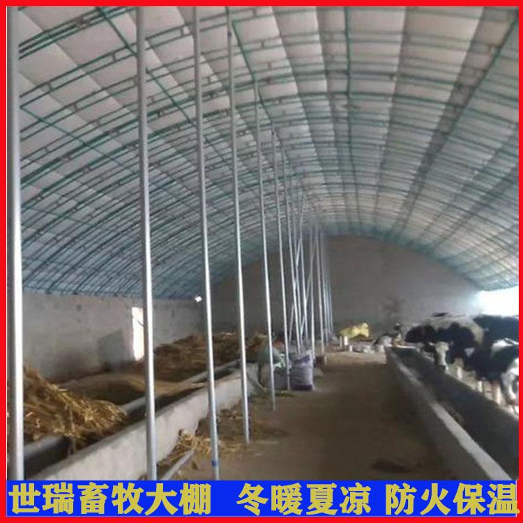 养牛场牛棚搭建 养奶牛大棚 肉牛养殖棚安装包工包料